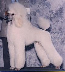 Puppyschur